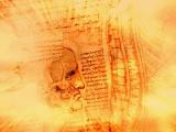 Leonardo, Studies of the Shoulder and Neck, c. 1509-1510